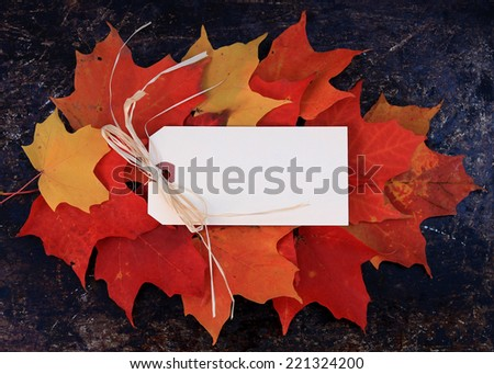 Autumn, fall or Thanksgiving background. Blank cream tag with copy space, on top of red, orange and yellow maple leafs. Use your own text. - stock photo