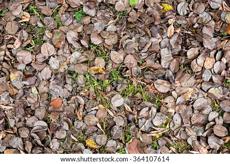 Autumn, fallen brown leaves lying on green grass. Autumn leaves brown background - stock photo