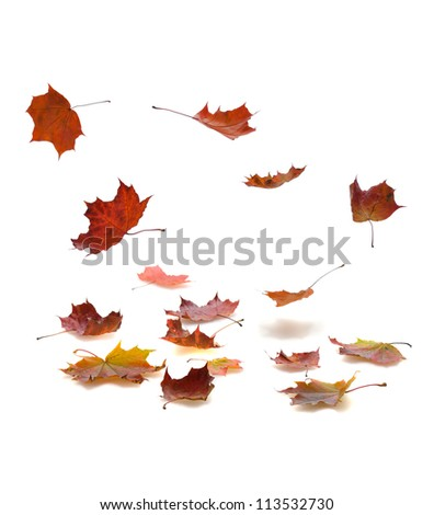 autumn falling leaves with shadow on white background - stock photo