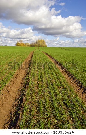 autumn farm field with green cereal crop and tractor traces. Agriculture landscape - stock photo