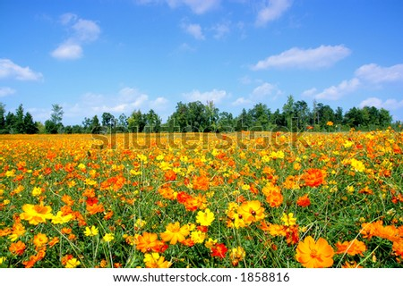 Autumn Field of Wildflowers - stock photo