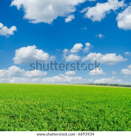 Autumn field on a background of the blue sky and white clouds.