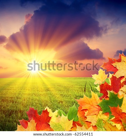 autumn field with border from fall colored leaves - stock photo