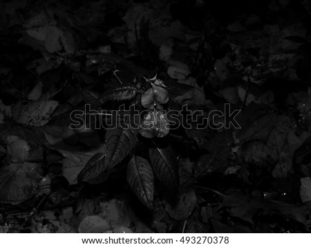 Autumn flower on black and white photography