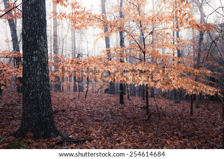 autumn foggy day in the forest - stock photo