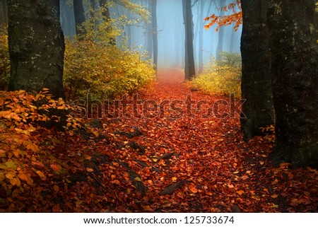 Autumn foggy day into the forest - stock photo