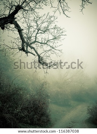 Autumn foggy forest - stock photo