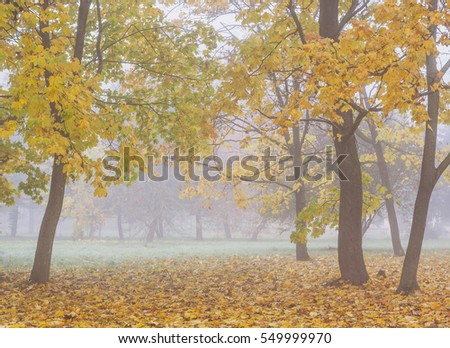 Autumn.Foggy morning in the park