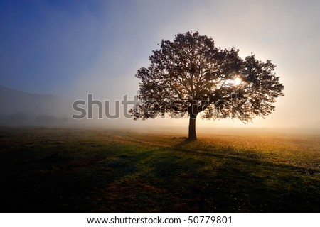 autumn foggy morning on field