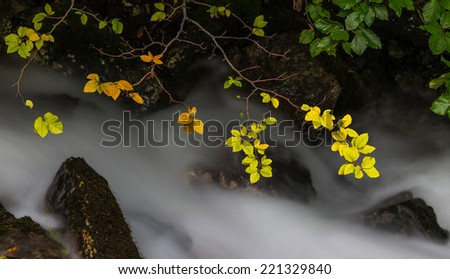 Autumn foliage and flowing stream in the forest - stock photo