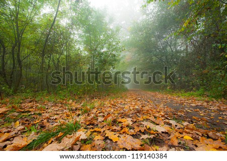 Autumn foliage and morning mist in the forest - stock photo