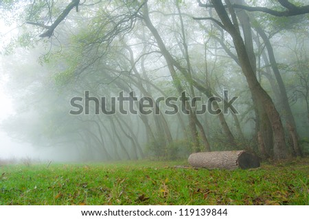Autumn foliage and morning mist in the forest in October - stock photo