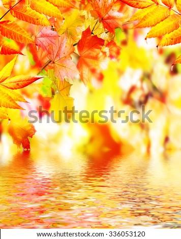 autumn foliage. Autumn time. Gold autumn. - stock photo