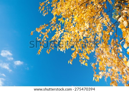 autumn foliage branch and blue sky - stock photo