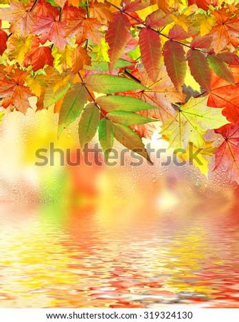 Autumn foliage. Golden Autumn. Photo. - stock photo