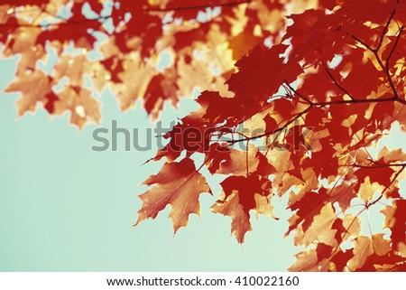 Autumn foliage in New England area. - stock photo