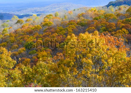 Autumn foliage in Shenandoah National Park - Virginia, United States  - stock photo