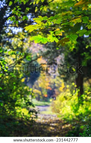 Autumn foliage in the forest, on a bright sunny day