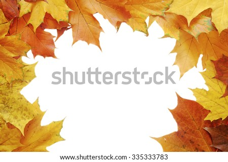 Autumn Foliage On White