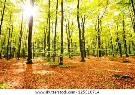 Autumn forest - stock photo