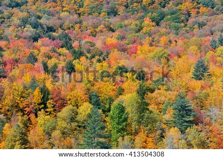 Autumn forest abstract background from Stowe, Vermont - stock photo