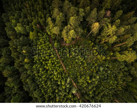 Autumn forest aerial view - stock photo