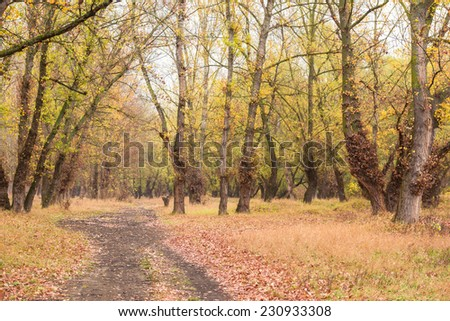 autumn forest after the rain