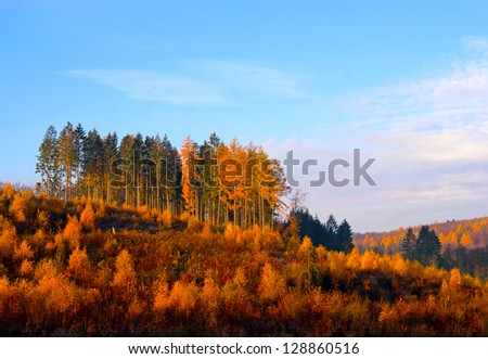 Autumn forest against the blue sky