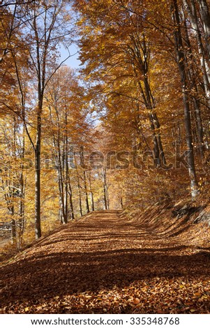autumn forest alley - stock photo