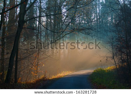 Autumn forest and road