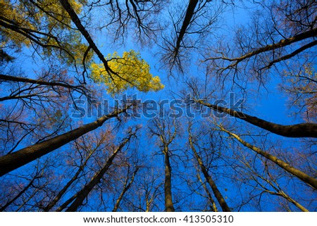 autumn forest and sky - stock photo