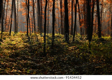 Autumn forest and trees with colorful leafs