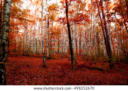 autumn forest as very nice natural background
