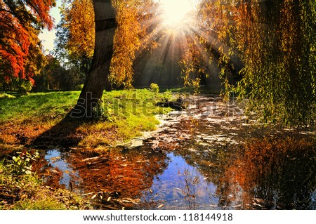 Autumn forest at sunset. Sunset in the woods.Beautiful autumn forest and bright morning sun - stock photo