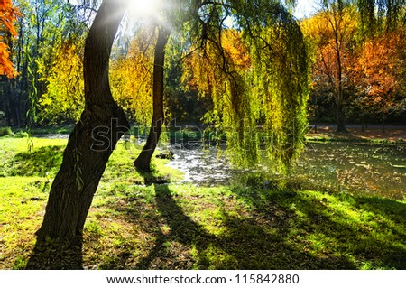 Autumn forest at sunset. Sunset in the woods .Forest at dusk - stock photo