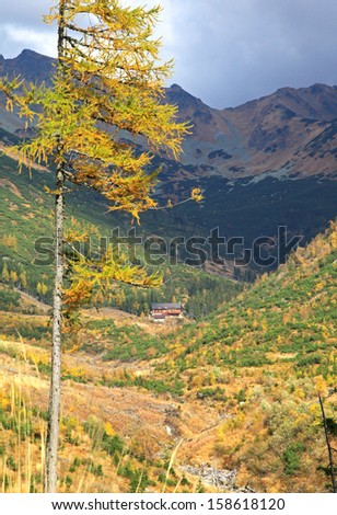 Autumn forest at Ziarska dolina - valley in High Tatras mountains, Slovakia