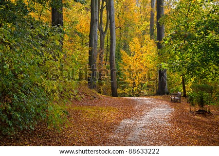 Autumn Forest. Autumn Landscape. Forest Road.