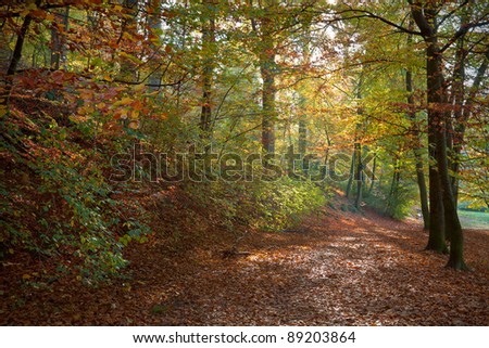 Autumn Forest. Autumn Landscape. Forest Road. - stock photo
