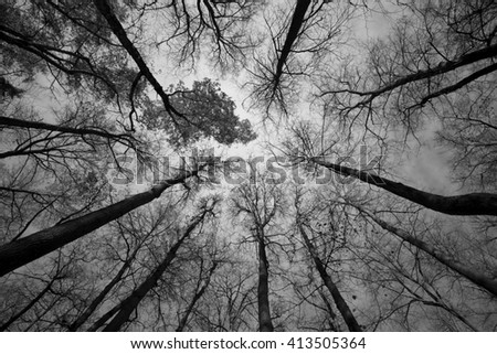 autumn forest black and white photo - stock photo