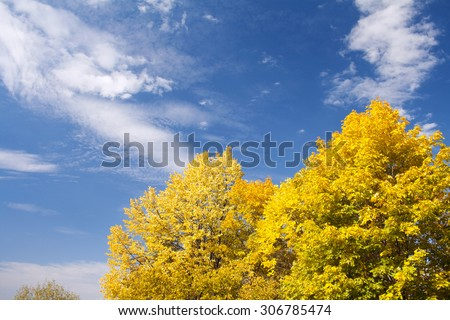 Autumn forest. Blue sky and white clouds - stock photo