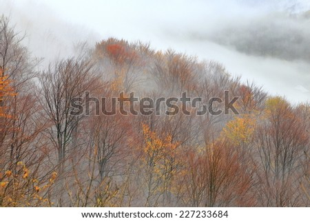 Autumn forest covered by morning mist - stock photo