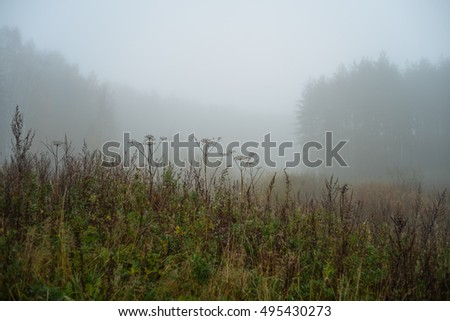 Autumn forest foggy morning