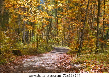 autumn forest hiking track background