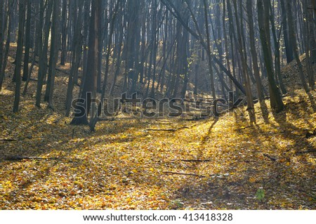 autumn forest in fine weather - stock photo