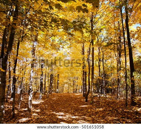 Autumn Forest in its beauty fading and falling of yellow and red leaves gives it a special flavor