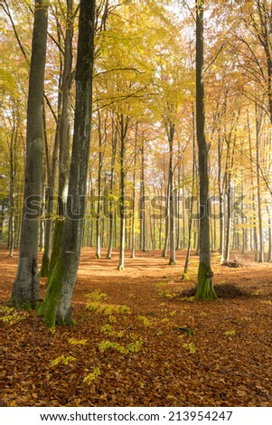 Autumn forest in north Poland