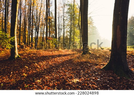 Autumn forest in north Poland. / Autumn forest - stock photo