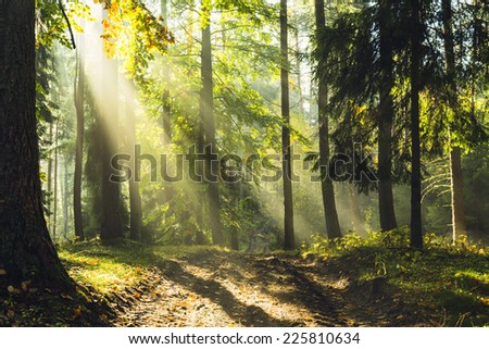 Autumn forest in north Poland.Pomerania province/Autumn Rays of light - stock photo