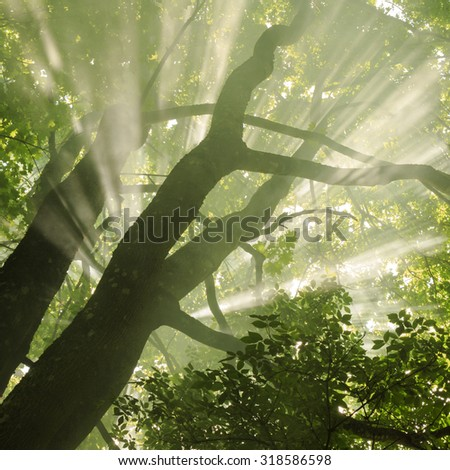 Autumn forest in north Poland.Pomerania province/ Rays of light - stock photo