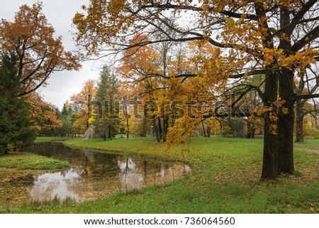 Autumn forest in Pushkin, Saint-Petersburg, Russia
